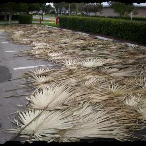 Palm Leaf Thatching